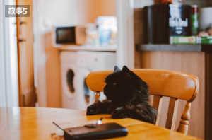 猫饭故事-主人我想陪伴你更久